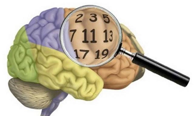 Como o cérebro desenvolve habilidades cognitivas para lidar com os números