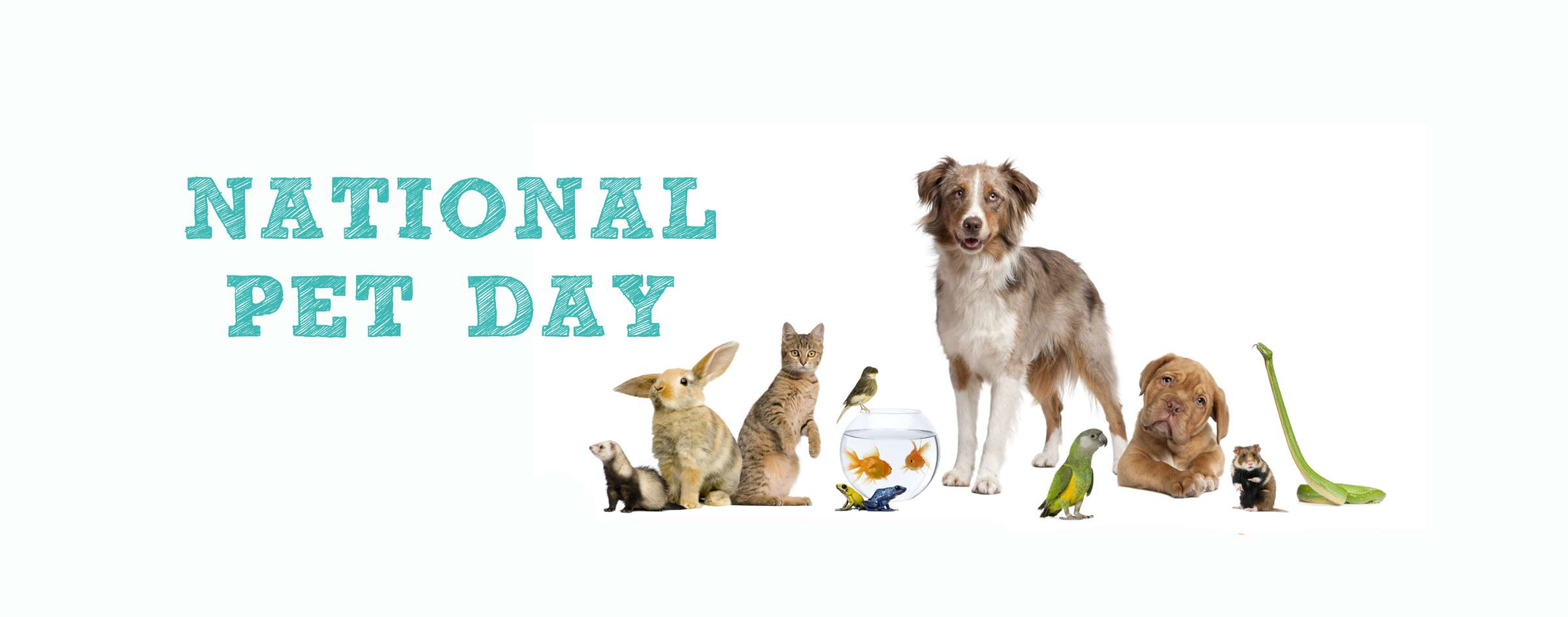 National Pet Day Wishes Images