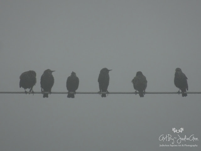 Starlings In The Fog 7 Photo + Video