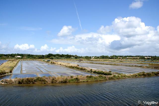Le saline nella riserva naturale di Noirmoutier en Ile