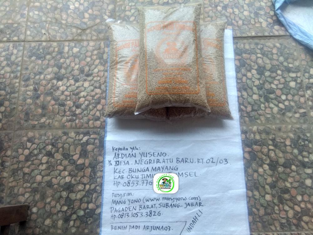 Benih Padi yang dibeli   ARDIAN YUSENO OKU Timur, Sumsel.   (Sebelum packing karung).