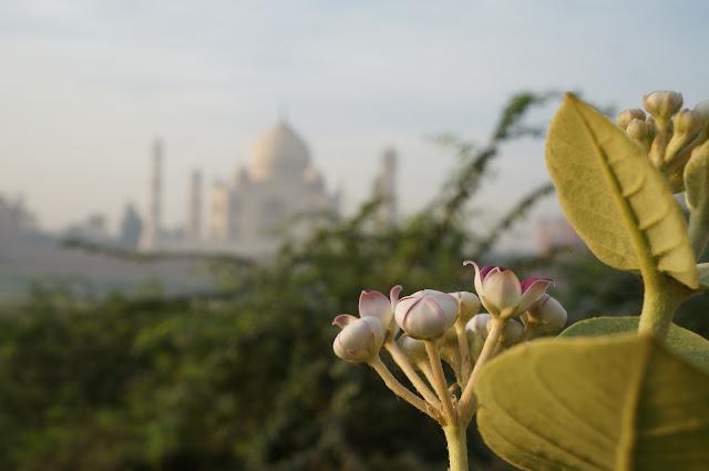 Mehtab Bagh diseberang Taj Mahal, Agra, India