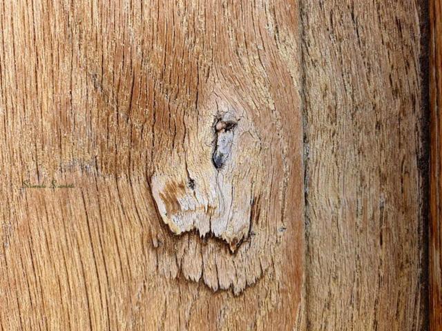 Figura di leone su una vecchia porta di legno