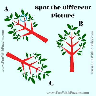 Answer of Find the Odd in the Puzzle Picture