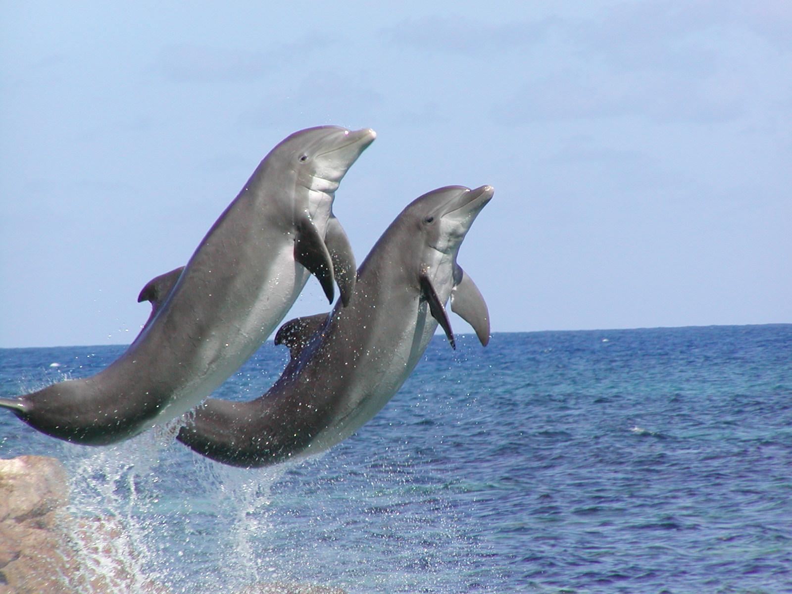 Dolphin Cove, Jamaica: Beta - Our Mischievous Dolphin!