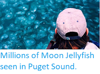 https://sciencythoughts.blogspot.com/2019/10/millions-of-moon-jellyfish-seen-in.html