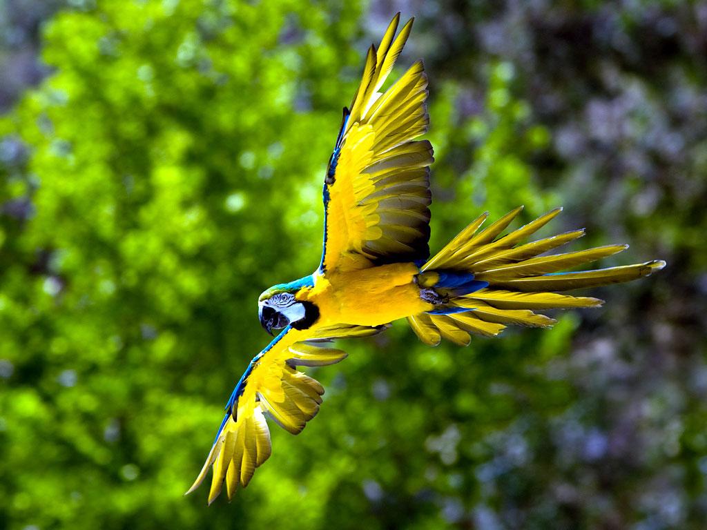 The Pet Bird Page (Parrots)