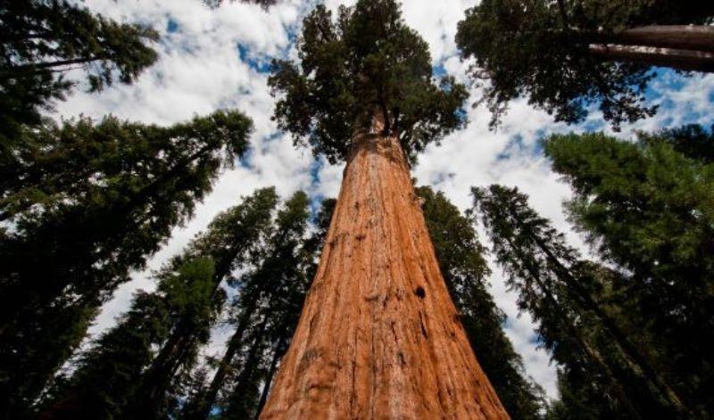 Wisata di Hutan Pohon Purba Terbesar di Dunia dan Setinggi Pencakar Langit