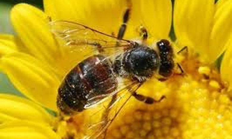 Το… μόριο κι η μέλισσα