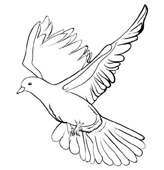 burung merpati kartun
