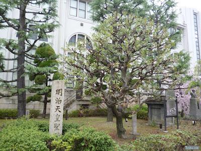 ヤマモモの木と明治天皇聖躅碑