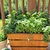 Herbs for Healthy Backyard Chickens
