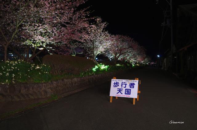 伊豆・河津櫻祭,夜櫻。步行者天國