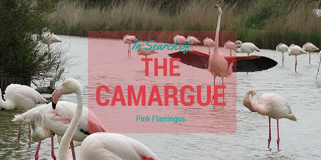 Pink Flamingos of the Camargue - http://www.sidewalksafari.com/2015/07/pink-flamingos-of-the-camargue.html