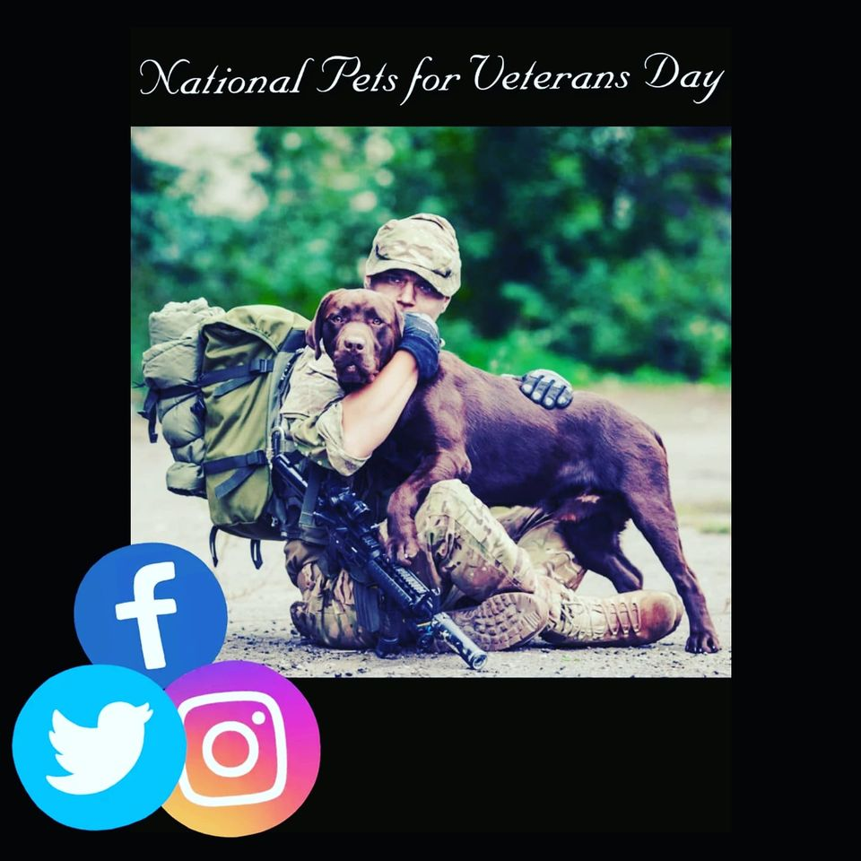 National Pets for Veterans Day Wishes Images