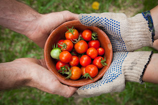 Sharing life - two sets of hands holding a small bowl of tomatoes