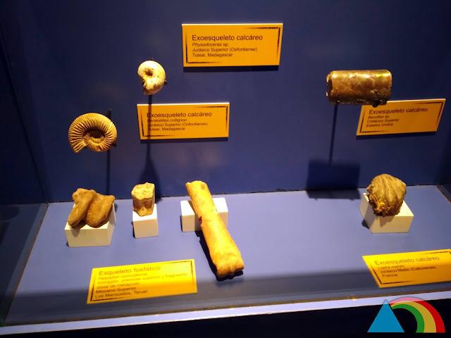 Fósiles de Mar Nummus en Albarracín
