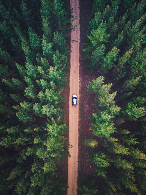 Vehicle on Road Between Trees | Photo by Liam Pozz via Unsplash