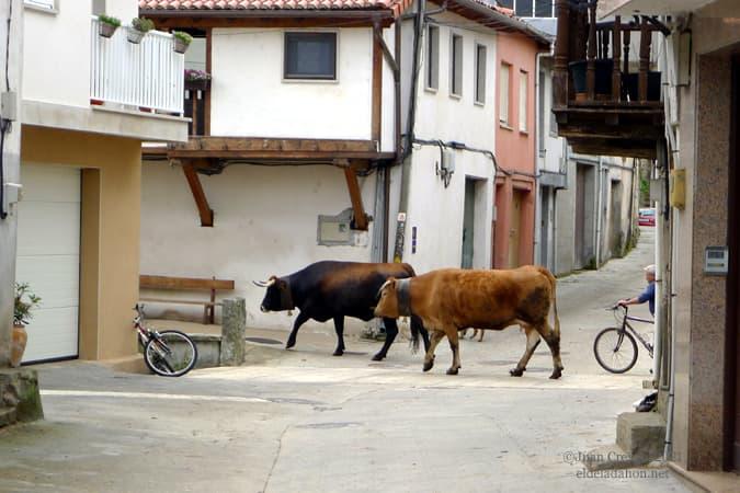 pasto-bici-laza