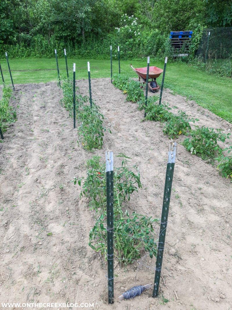 DIY tomato trellis   On The Creek Blog // www.onthecreekblog.com