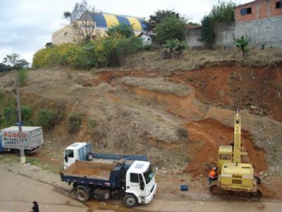 Terreno da CPTM próximo à estação Jaraguá, onde centenas de margaridões-amarelos