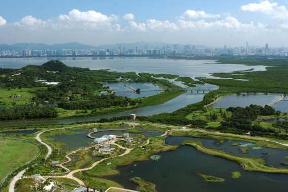 Birdwatching di Hong Kong Wetland Park