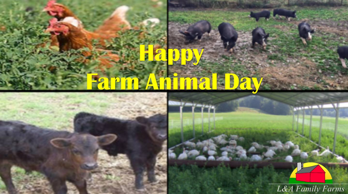 World Animal Day Wishes