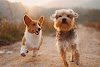 Important tips for dogs that help to deal with it you must know