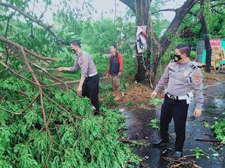 Quick Respon Kanit Laka Satlantas Polres Gowa, Evakuasi Pohon Tumbang yang Lumpuhkan Akses Jalan
