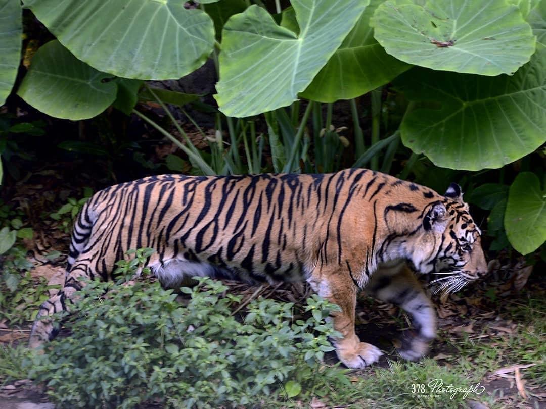 Jadwal Gembira Loka Zoo