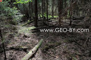 Лесные дебри. Путь в стражницу