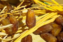 Kandungan nutrisi dan manfaat buah kurma untuk kesehatan