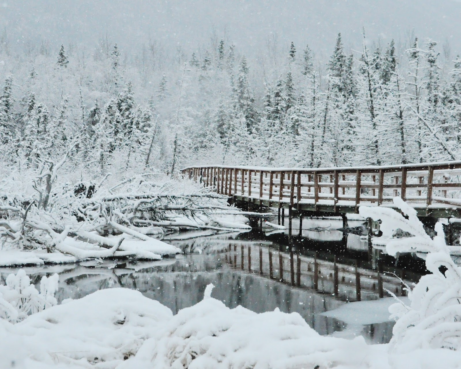 eagle river nature center winter hike