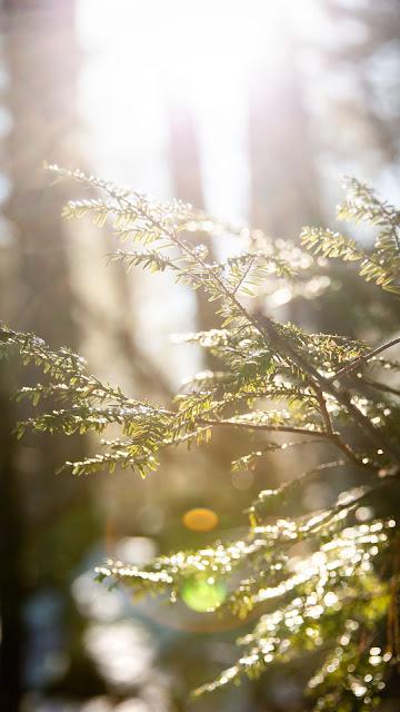 Sunligh, Branchs, Leaves, Macro wallpaper