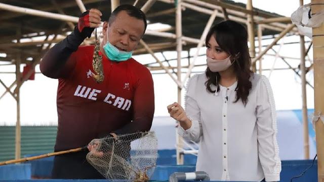 Larangan Ekspor Benih Lobster Dicabut, Edhy Prabowo: Prioritas Budidaya