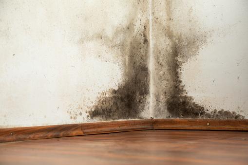 Jak skutecznie chronić się przed wilgocią w domu i mieszkaniu?