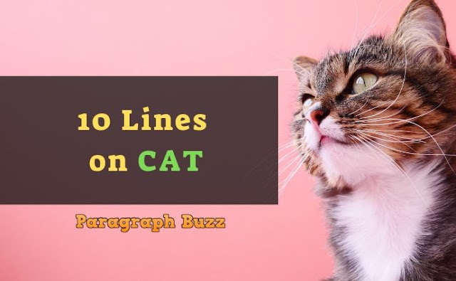 10 Lines on Cat in English