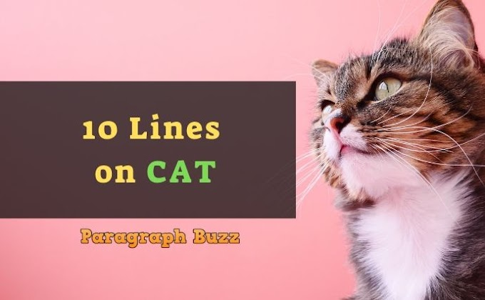 10 Lines on Cat in English for Kids and Students
