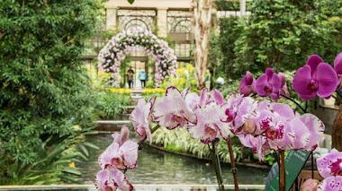 Longwood Gardens celebra su Festival de Orquídeas. 2017 Orchid Extravaganza
