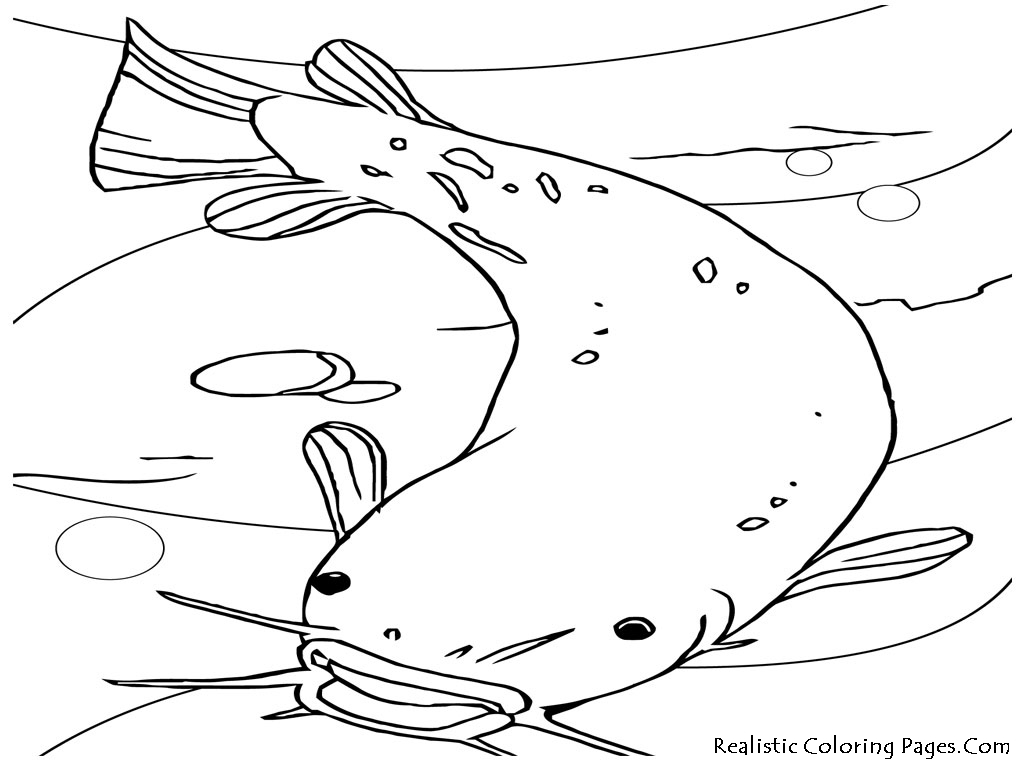 Fish realistic coloring pages realistic coloring pages for Color pages of fish