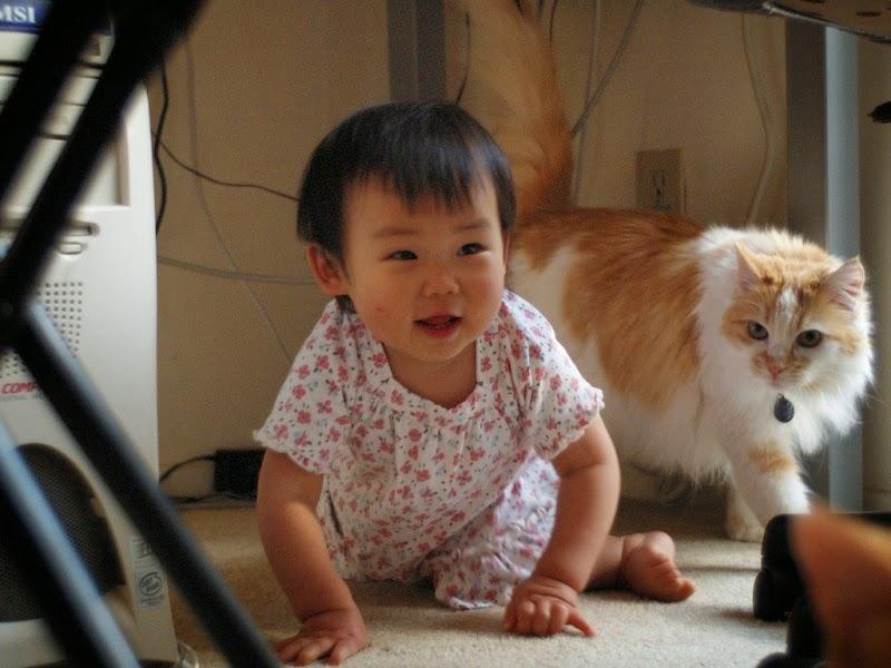 Foto bayi lucu merangkak bareng kucing hewan kesukaannya