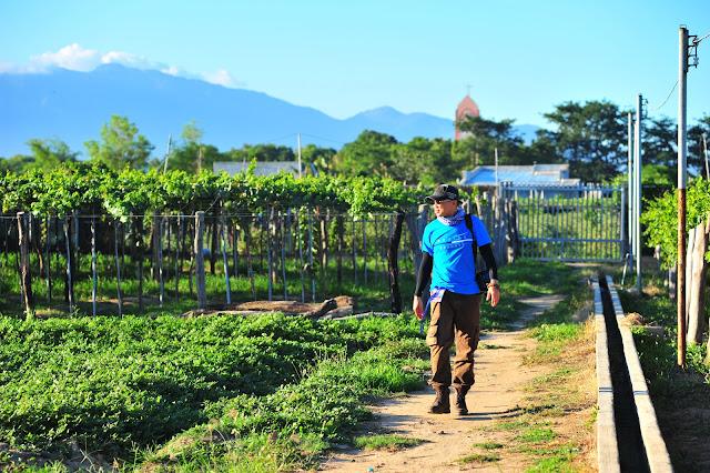 Tham quan vườn nho Ninh Thuận 2020