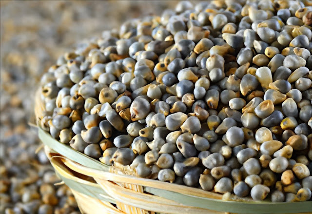 Consumption of millet is a panacea in winter, it keeps many diseases away, know the benefits World Daily News24 - English