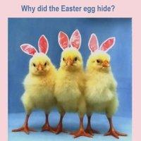 Easter Memes Images