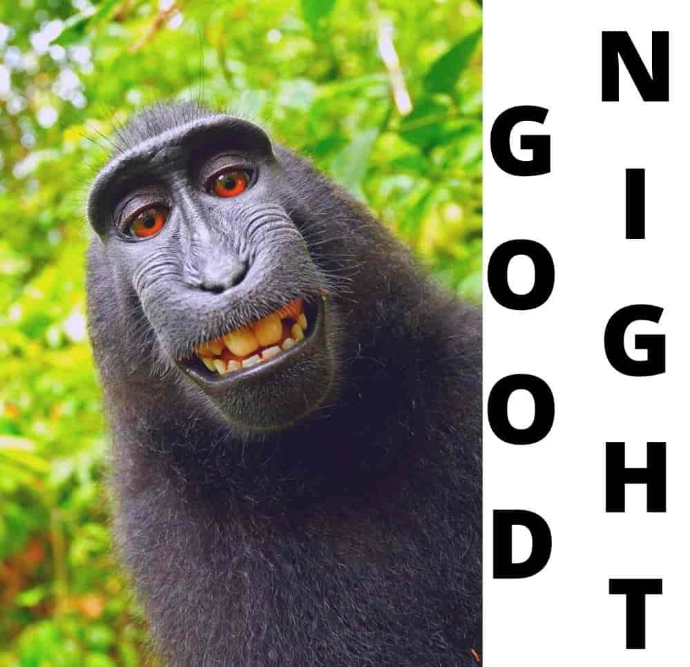 funny-good-night-monkey-image
