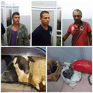 Polícia apreende veículo lotado de carneiros furtados e prende 3 acusados em Cuité
