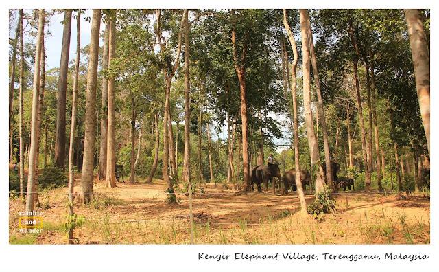 Kenyir Elephant Village, Tasik Kenyir, Lake Kenyir, Terengganu, Malaysia | www.rambleandwander.com