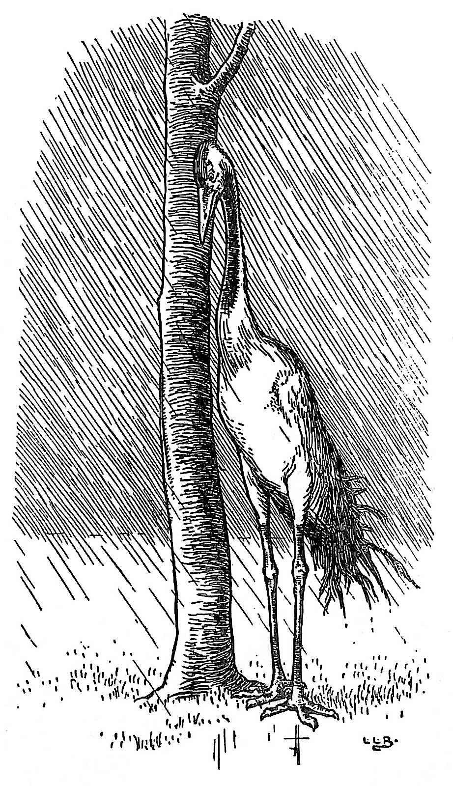 an L. Leslie Brooke 1903 illustration of a tall bird sheltering from rain