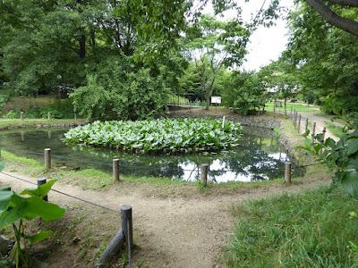花博記念公園鶴見緑地 ため池