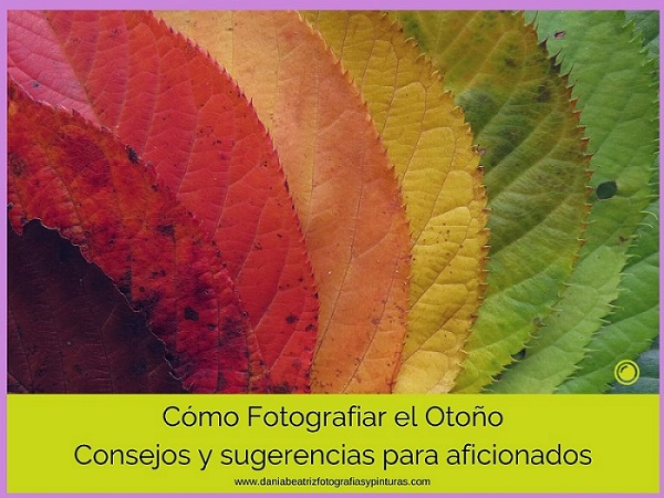 CÓMO-CONFIGURAR-TU-CÁMARA-PARA-FOTOGRAFIAR-EL-OTOÑO